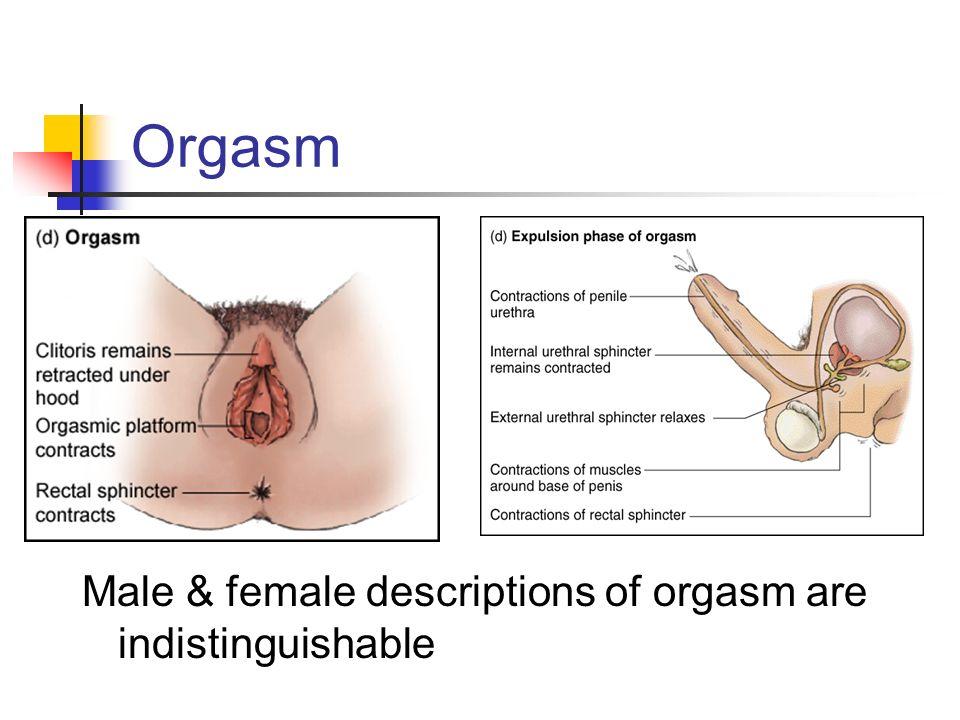 Anatomical female orgasm images 785