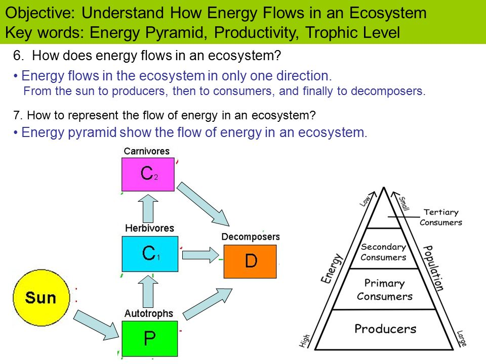 Create A Food Pyramid Online