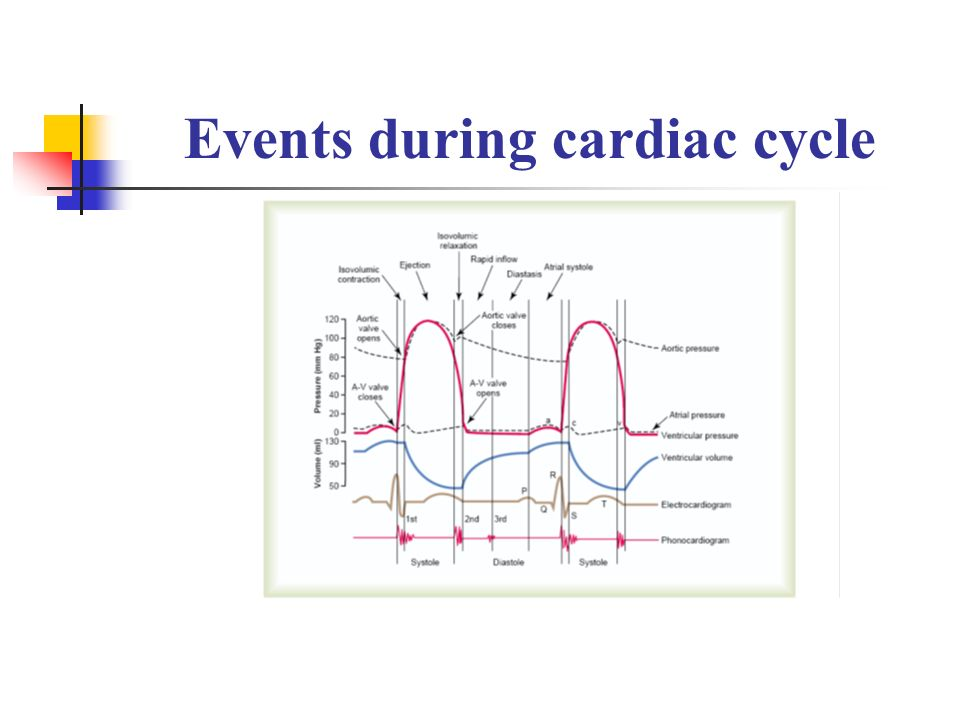Cardiac Cycle 1 Mechanical Events Volume Pressure Changes In