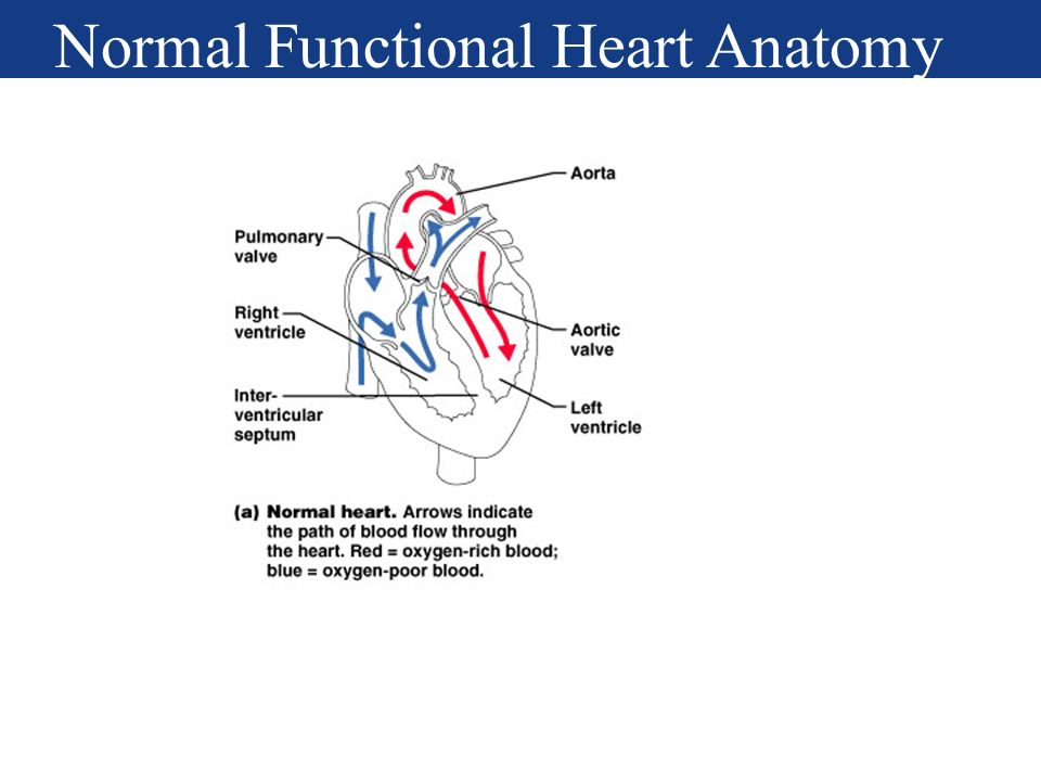 The Cardiovascular System: The Heart - ppt download