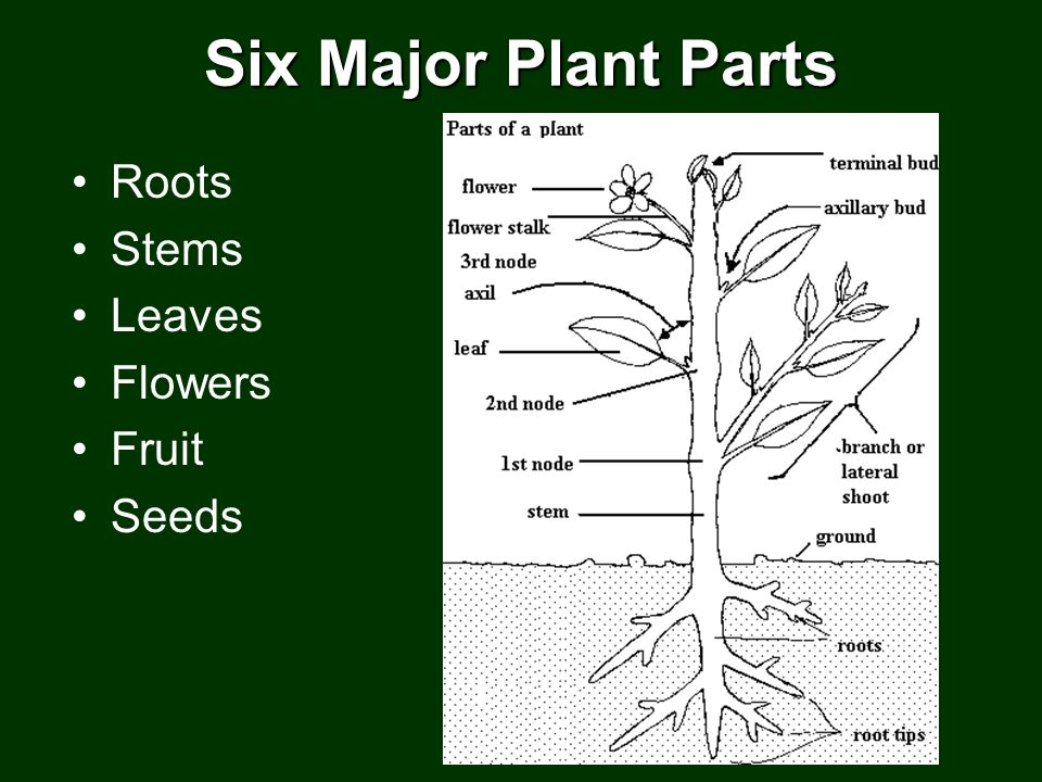 3.02 Discuss the anatomy and functions of plants - ppt download