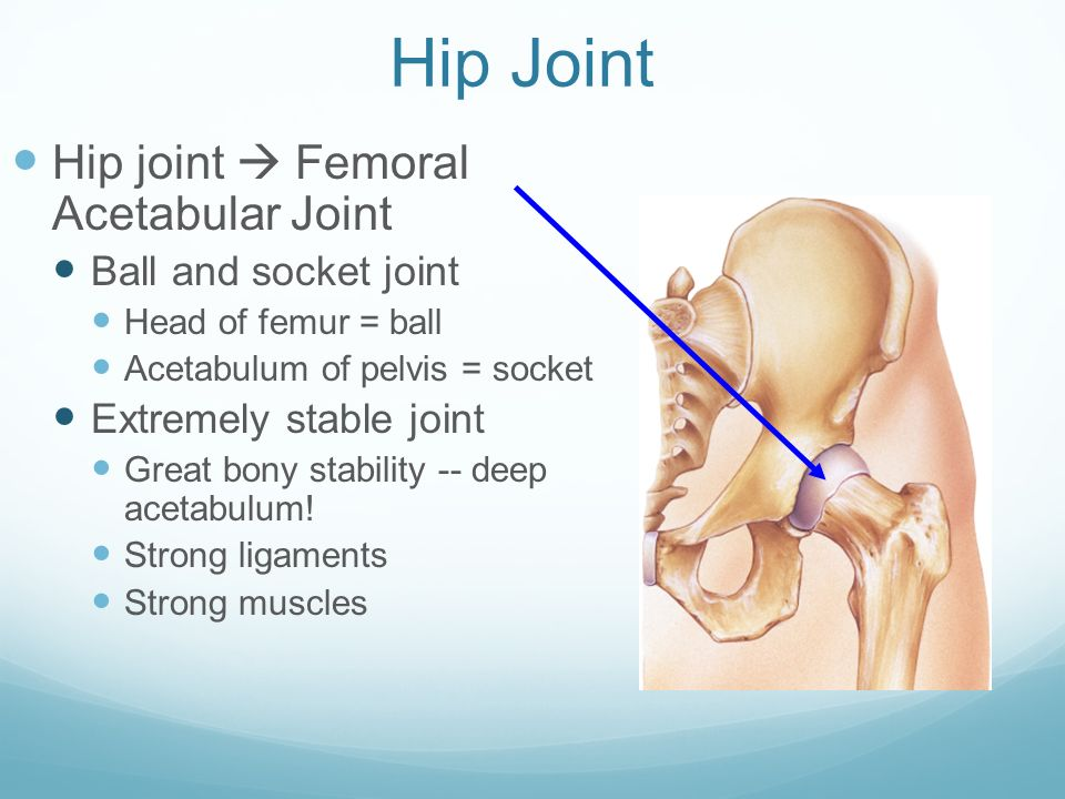The Anatomy Of The Hip And Pelvis Ppt Download