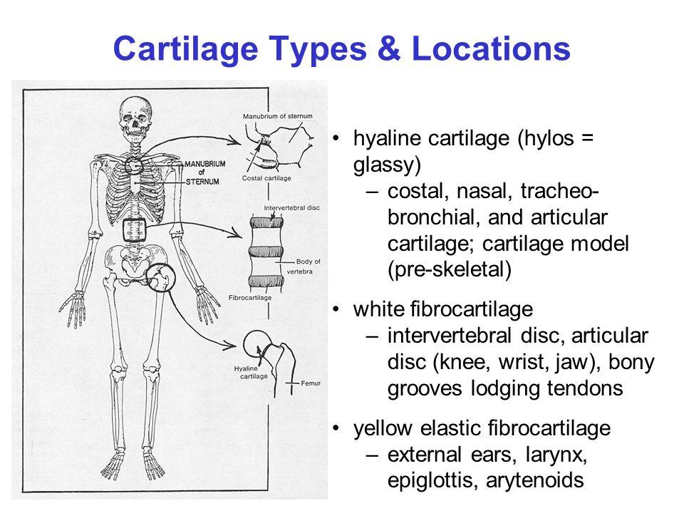Topic 18 Cartilage Mechanics Ppt Video Online Download