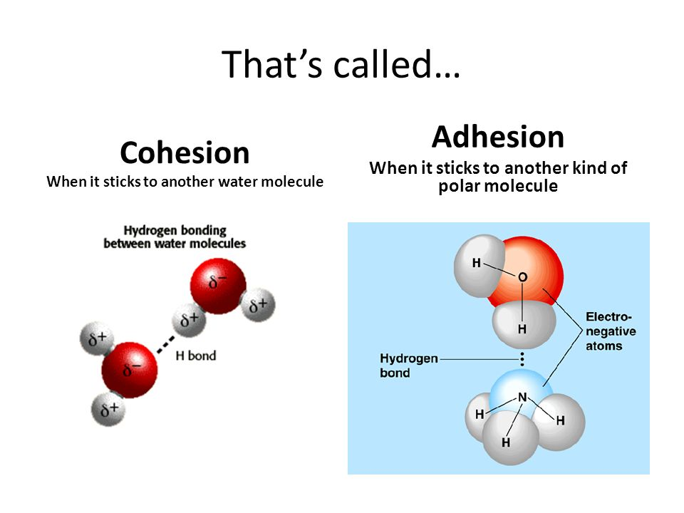 Cohesion And Adhesion Of Water Water Ionizer