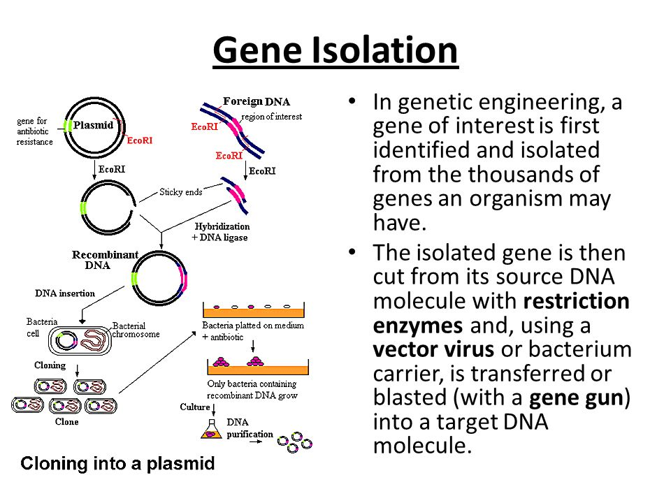definition genetic engineering refers to the scientific process of manipulating genetic material