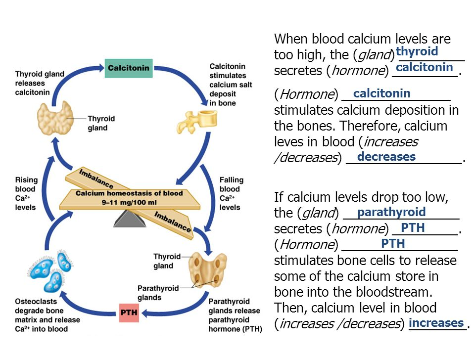 How A Negative Feedback Mechanism Works Ppt Video Online Download. Then Calcium Level In Blood Increases Decreases. Wiring. Bones In Calcium Homeostasis Diagram At Scoala.co