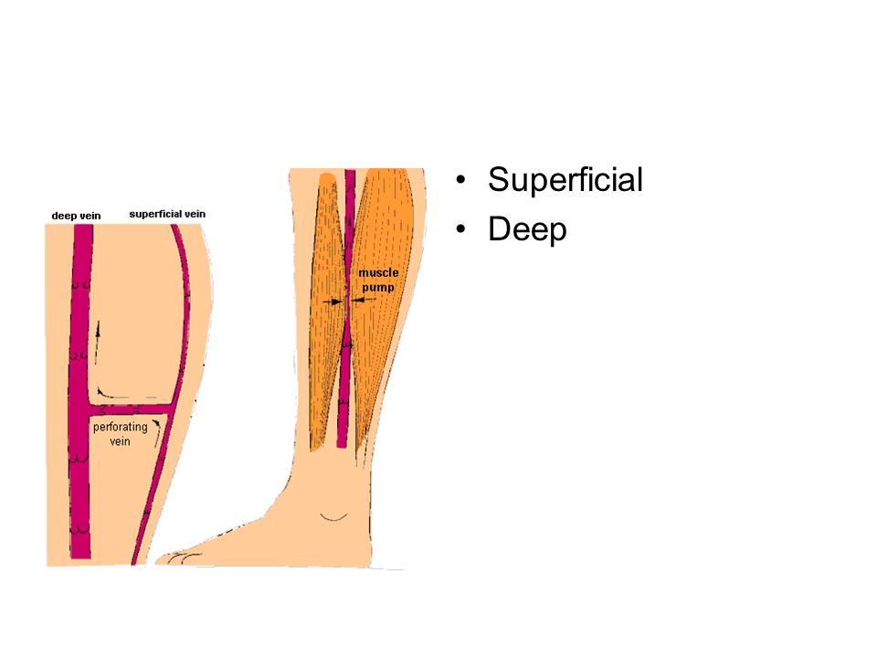 Directional and Anatomical Location Terminology - ppt video online ...