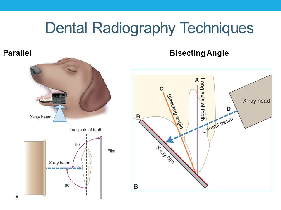 Dogs Teeth Diagram Radiograph Application Wiring Diagram