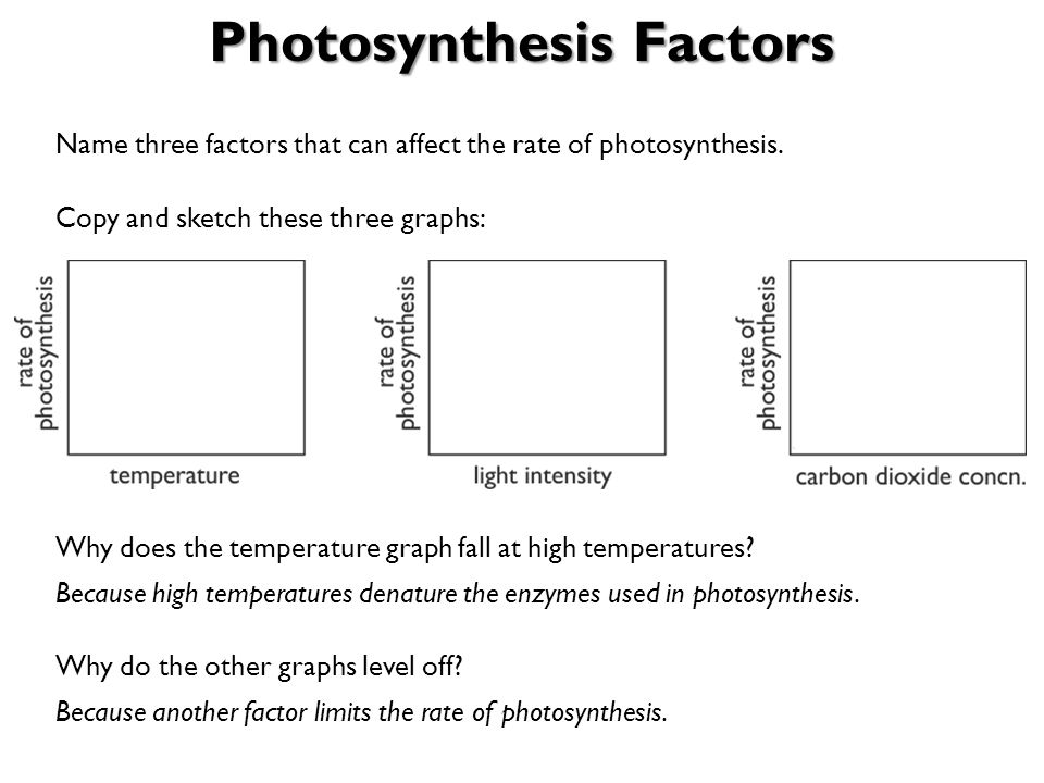 what are the three factors that affect photosynthesis