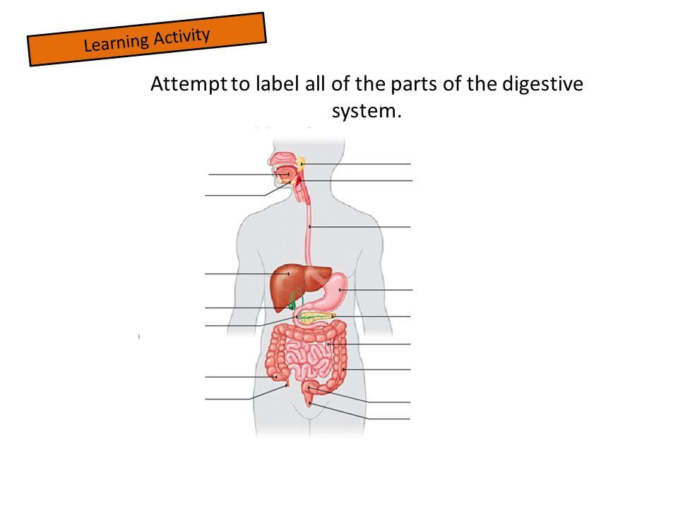 Digestive system the basics ppt video online download attempt to label all of the parts of the digestive system ccuart Gallery