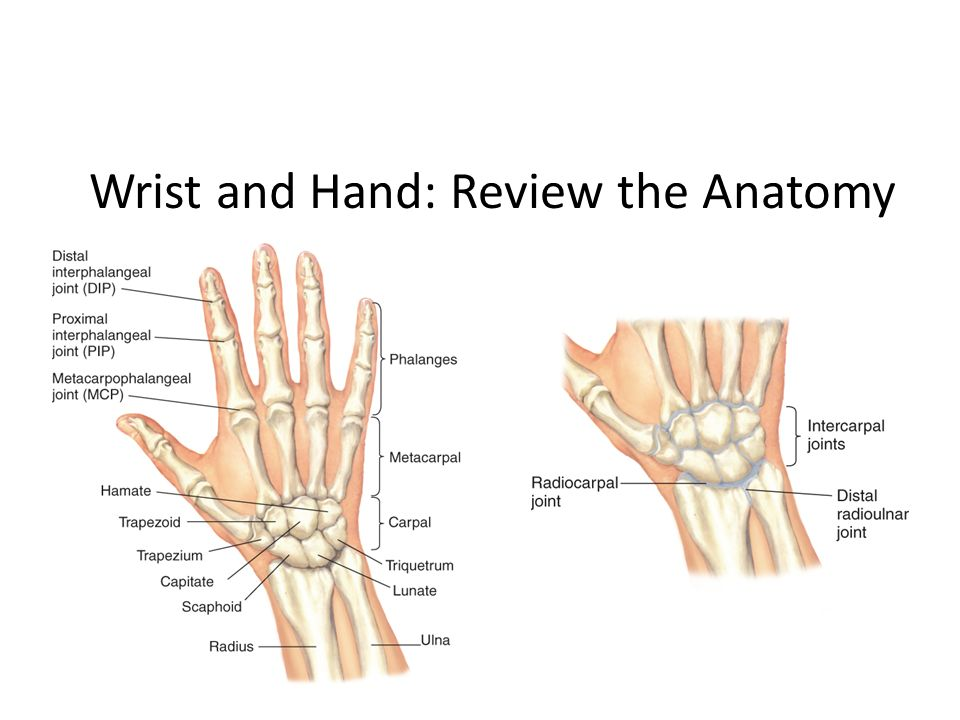 Chapter 15: Musculoskeletal System - ppt video online download