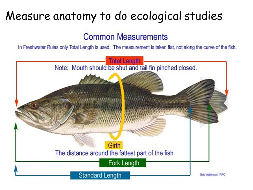Welcome to Ecology of Fishes Laboratory Zoology ppt video online ...