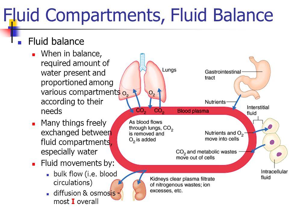 Fluid Electrolyte And Acid Base Homeostasis Ppt Video Online