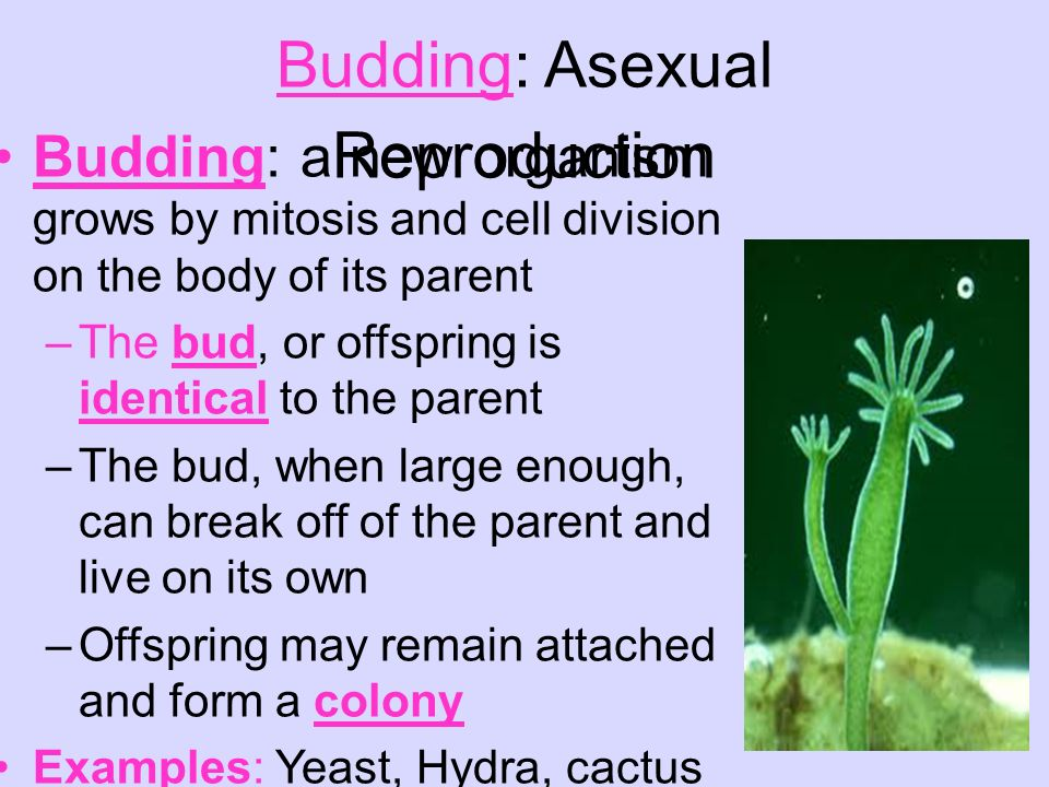 Asexual spores examples of cover
