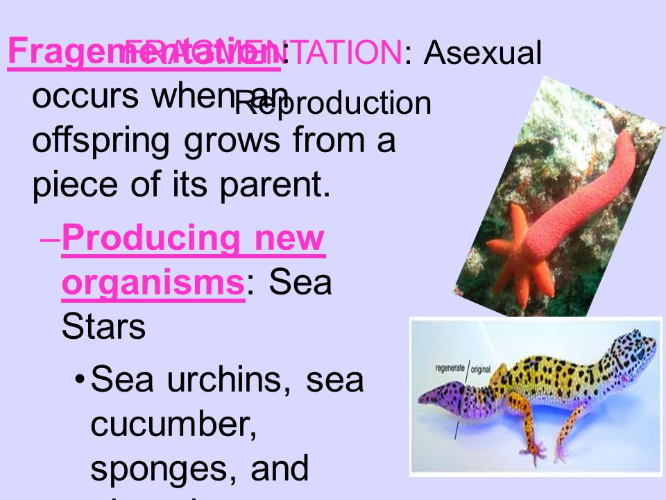 Sexual and Asexual Reproduction - ppt video online download