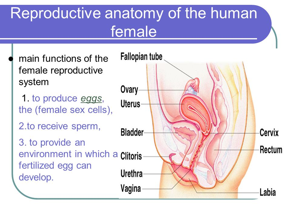 Ch. 22 Human Reproduction. - ppt download