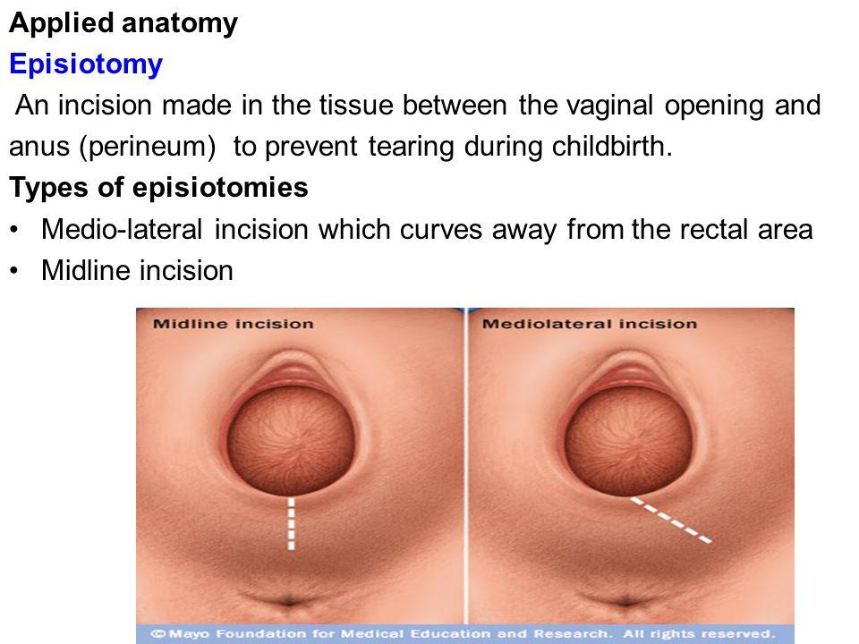 Beautiful Anatomy Of The Virgina Mold - Anatomy And Physiology ...