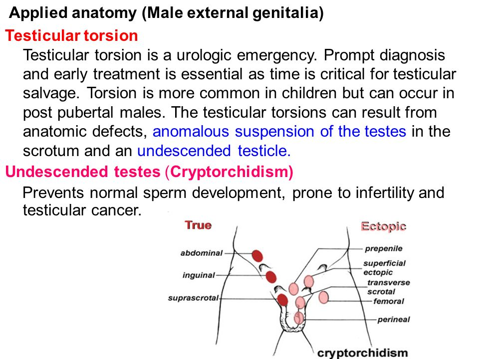 Gross Anatomy Of Male Female External Genitalia Mbbs Yr Ii Ppt
