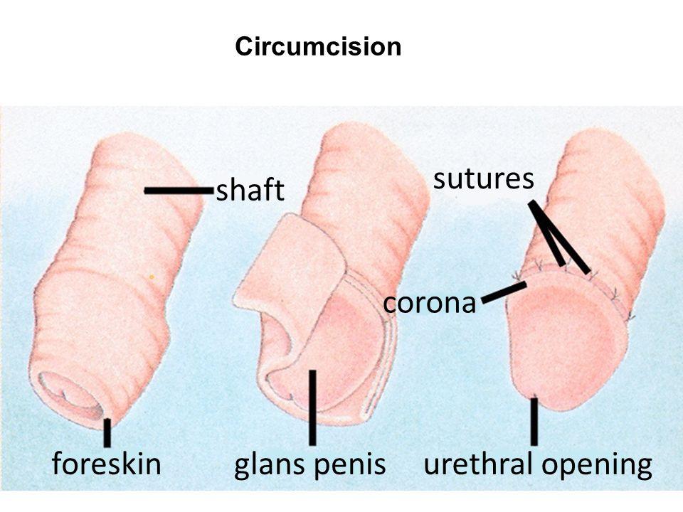 hot-nephilim-circumcision-multiple-orgasm