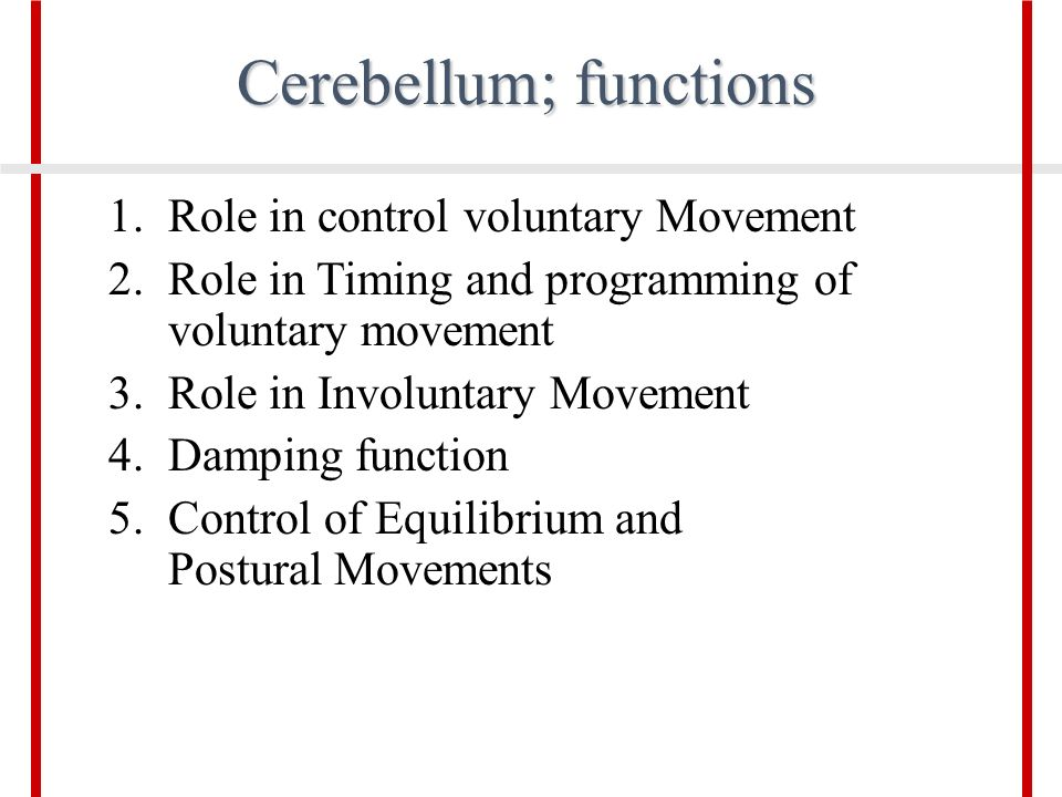 control of posture and movementpartiii ppt video