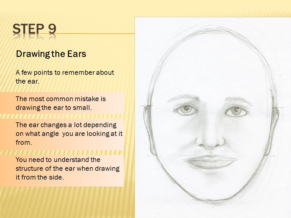 Proportions Of The Face Ppt Video Online Download