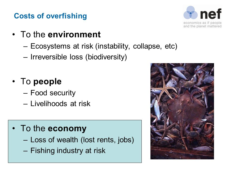 To the environment To people To the economy Costs of overfishing