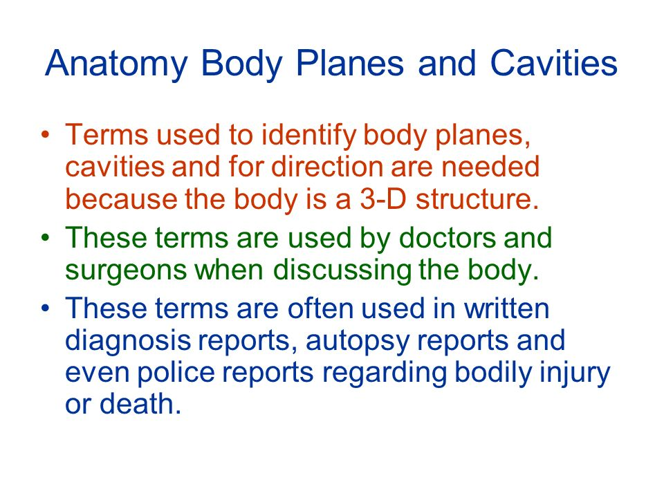 Anatomy Body Planes And Cavities Ppt Download