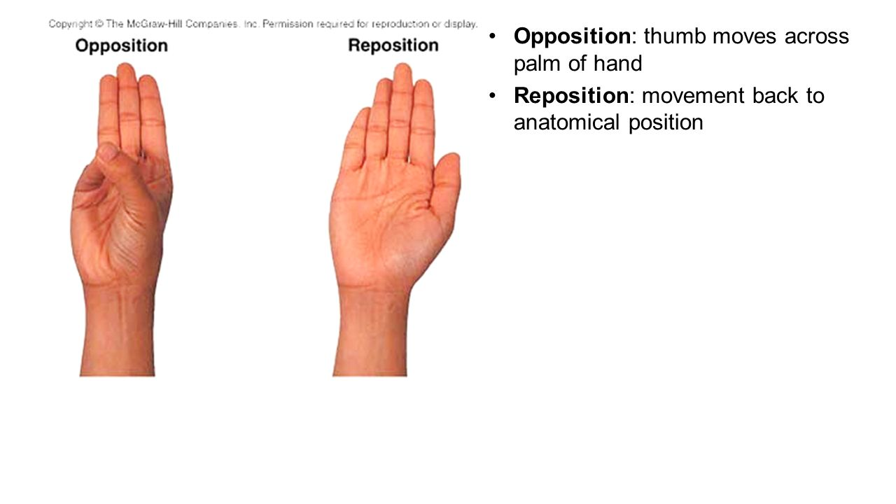 Chapter 9 Articulations Part 1, - ppt video online download
