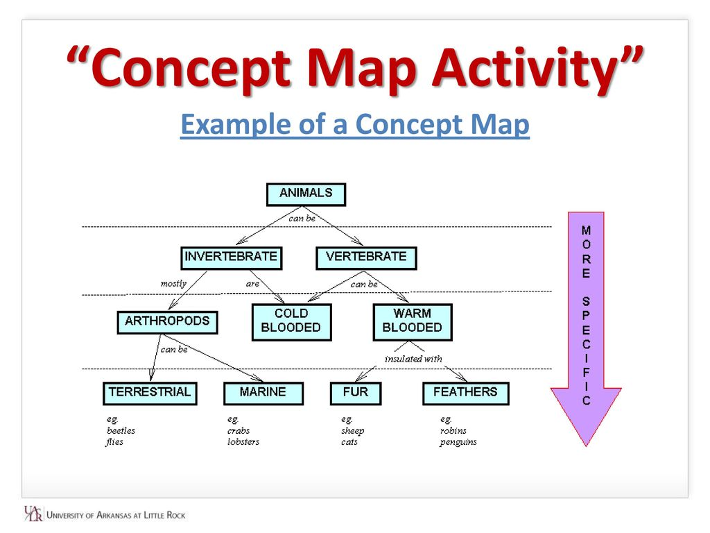 Flower Concept Map.Concept Map Concept Map Concept Map Activity Example Of A Concept