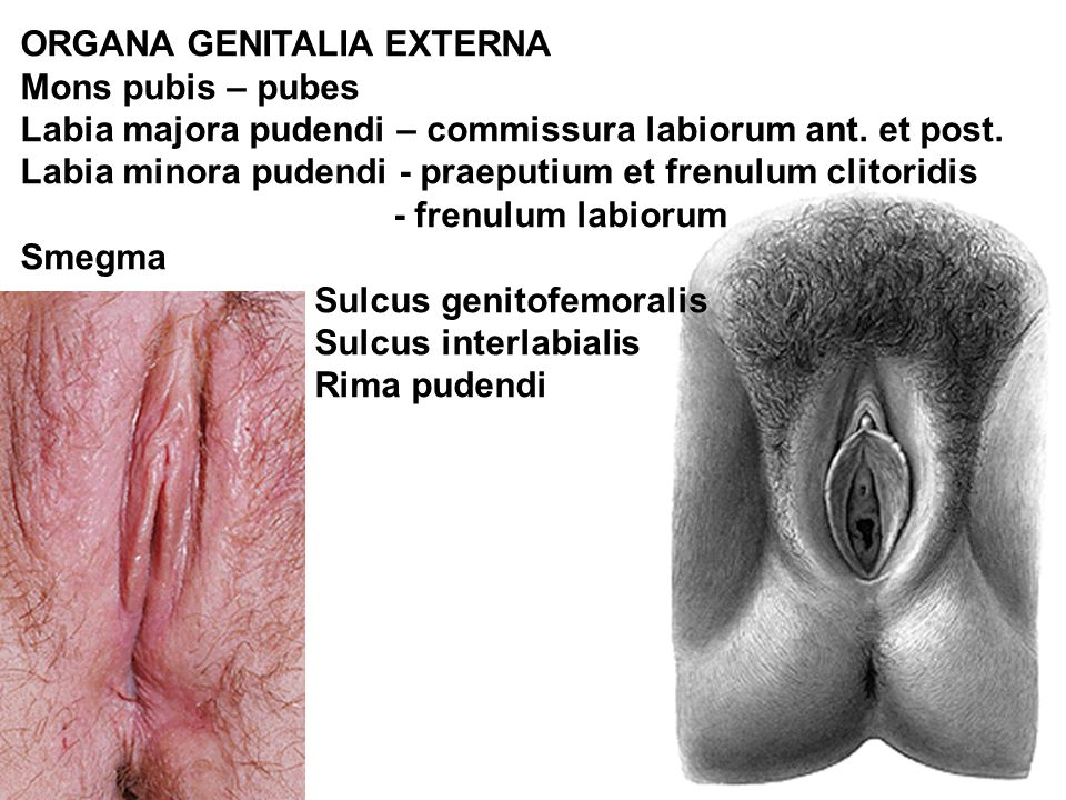 Smegma on vagina pics