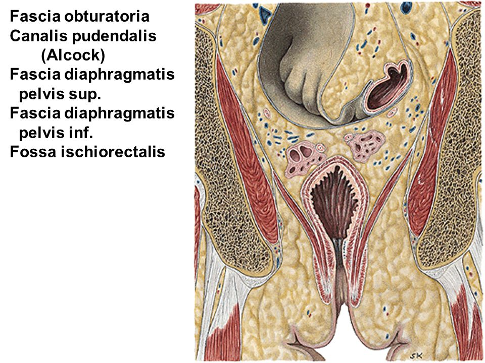 FEMALE GENITAL ORGANS. - ppt video online download