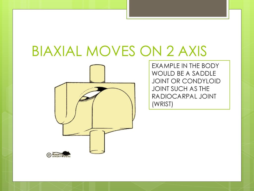 Joints Ppt Download Saddle Joint Diagram 11 Biaxial Moves On 2 Axis Example In The Body Would Be A Or Condyloid Such As Radiocarpal Wrist