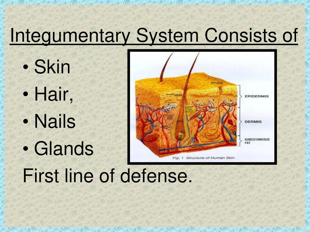 Disorders Of The Integumentary System Ppt Video Online Download
