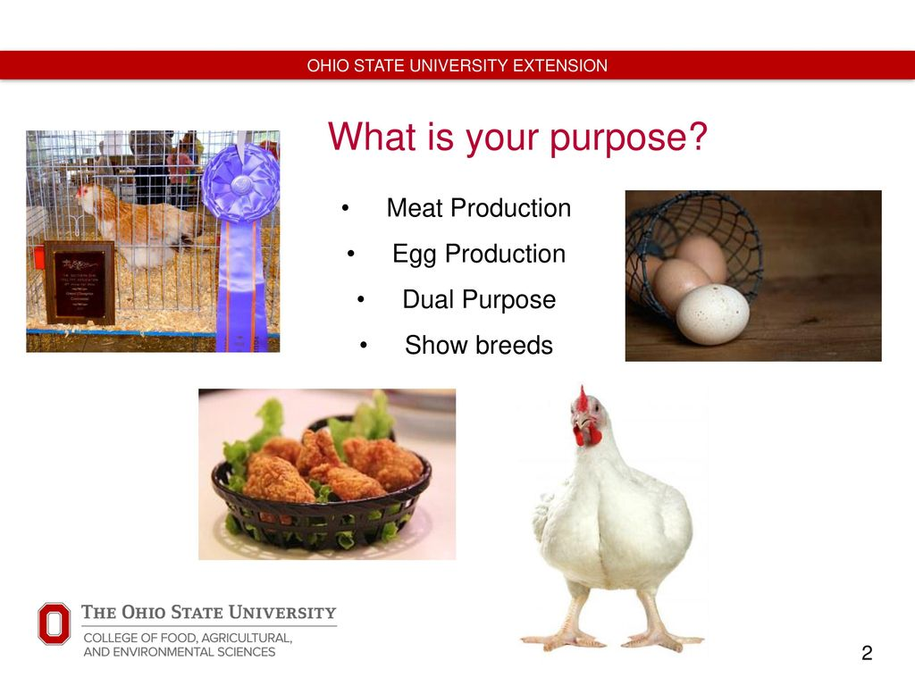 Healthy Practices for Backyard Poultry - ppt video online
