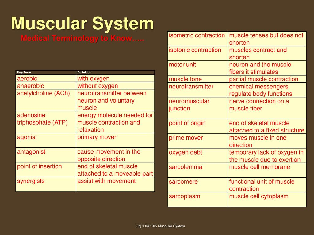 Muscular System Objective Ppt Download