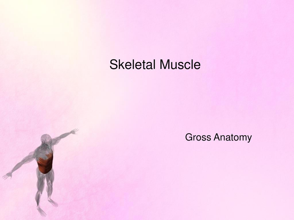 Muscles & Muscle Tissues - ppt download