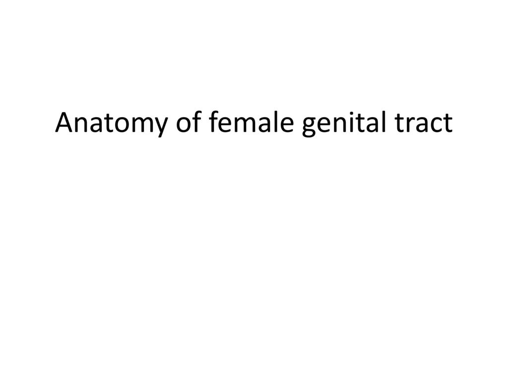 Anatomy of female genital tract - ppt download
