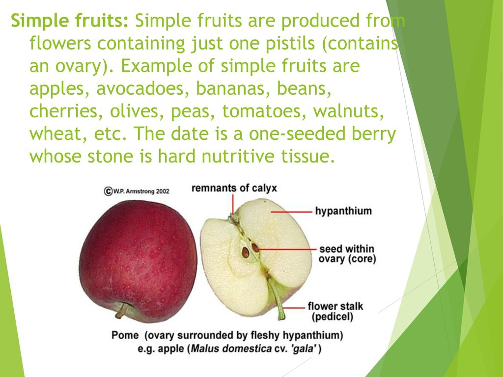 STRUCTURE AND COMPOSITION OF FRUITS - ppt video online download