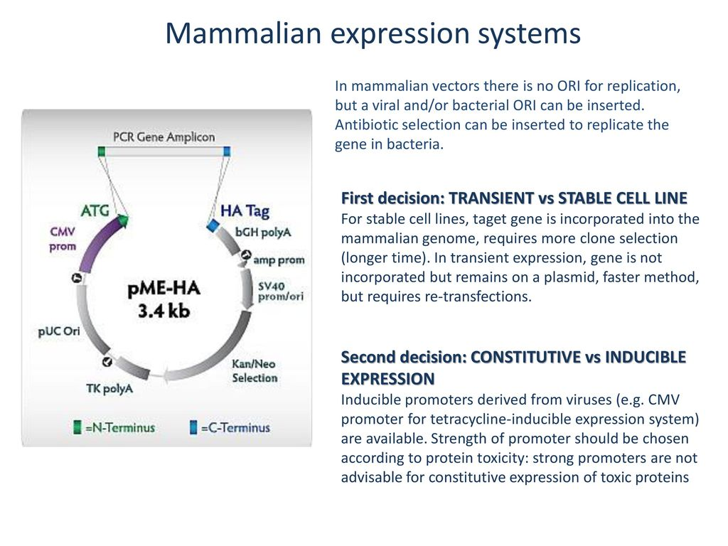Expression of recombinant proteins for structural studies