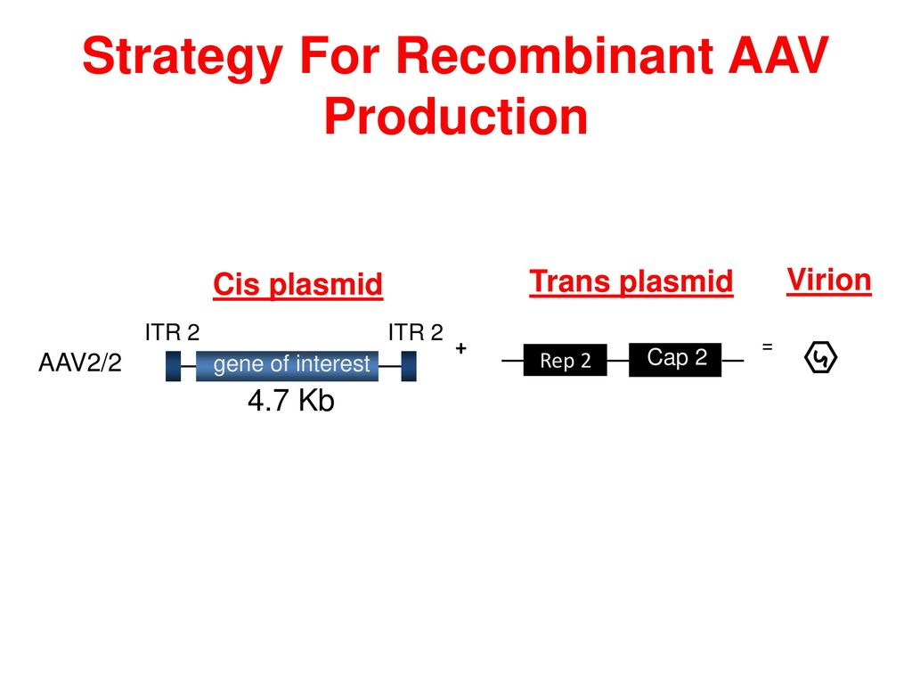 Strategy For Recombinant AAV Production