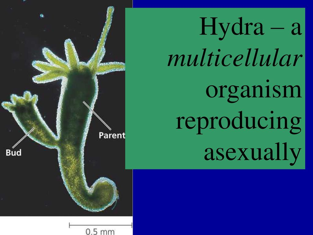 Plants reproduce asexually examples of verbs