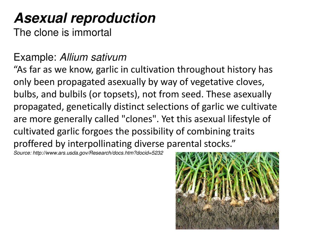 Agamogenesis asexual reproduction advantages