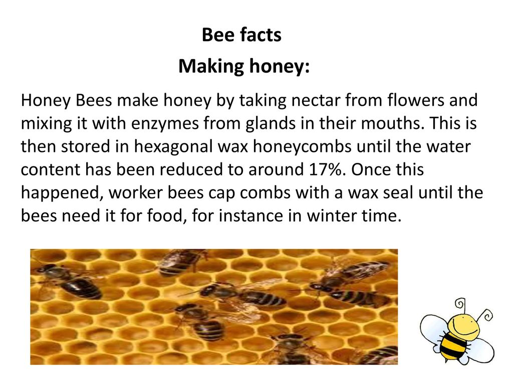 A friendly bee - ppt video online download