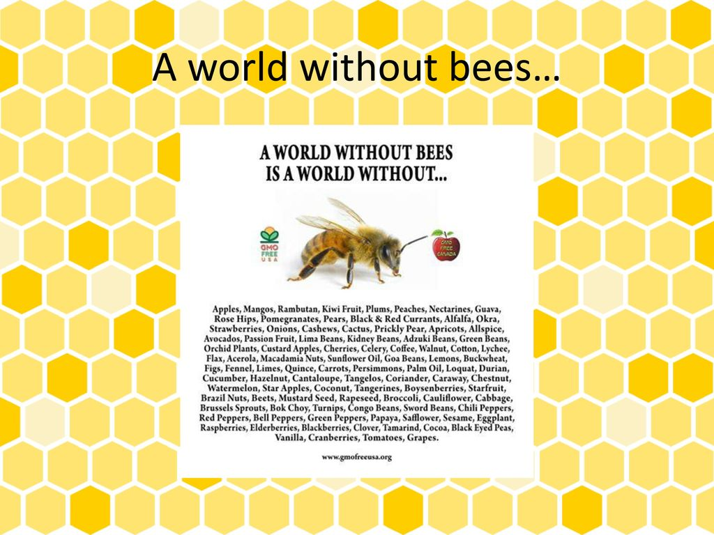 18 A World Without Bees