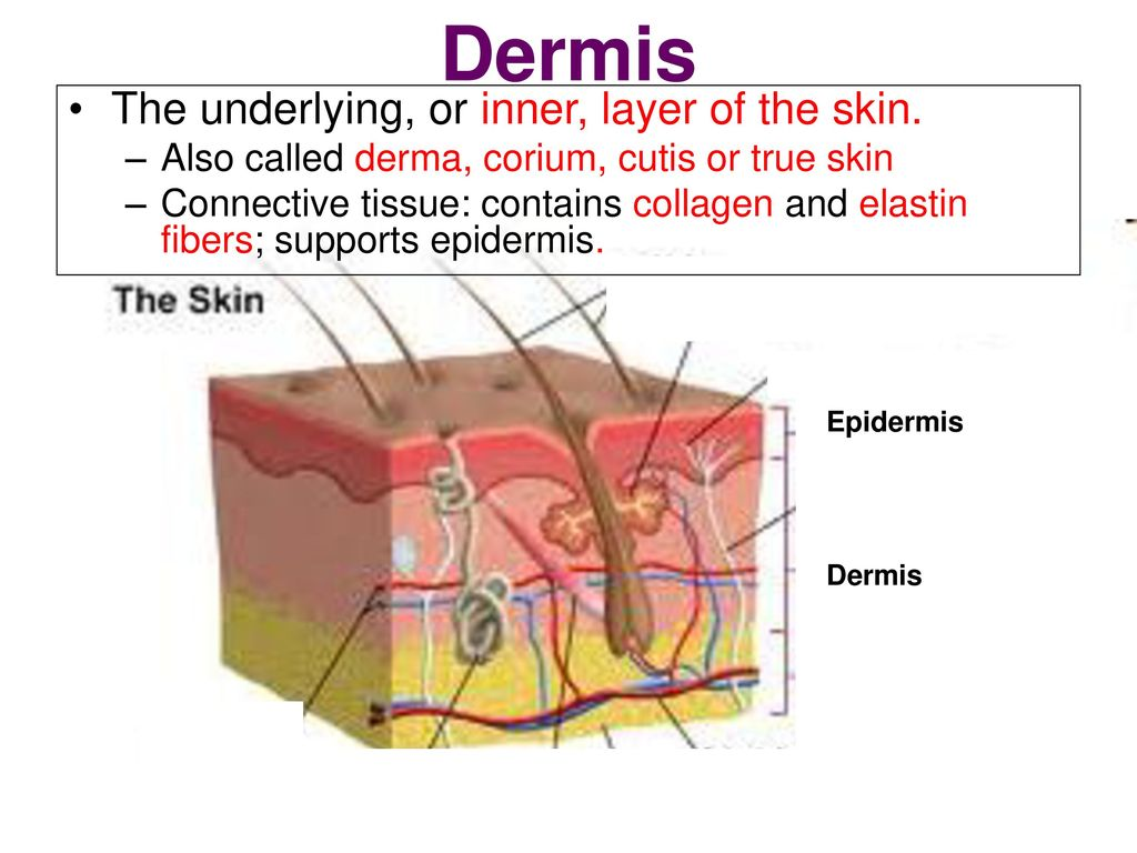 Skin Theory Skin Disorders Skin Care Ppt Video Online Download