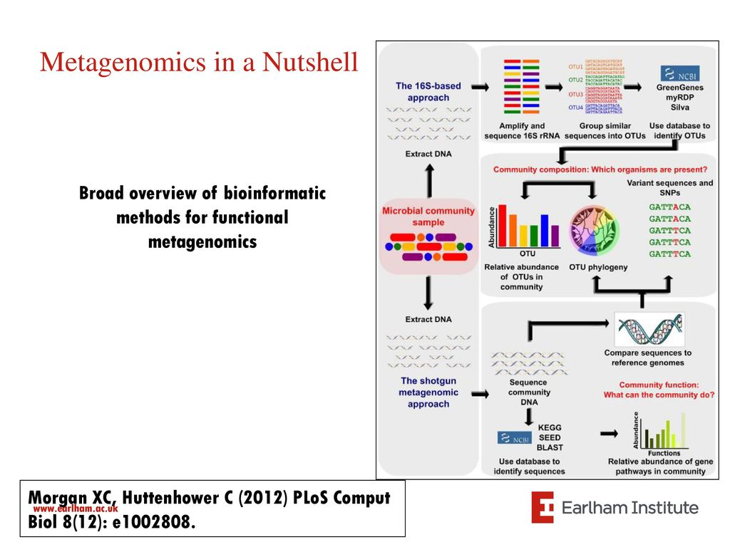 Metagenomics: From Bench to Data Analysis - ppt video online