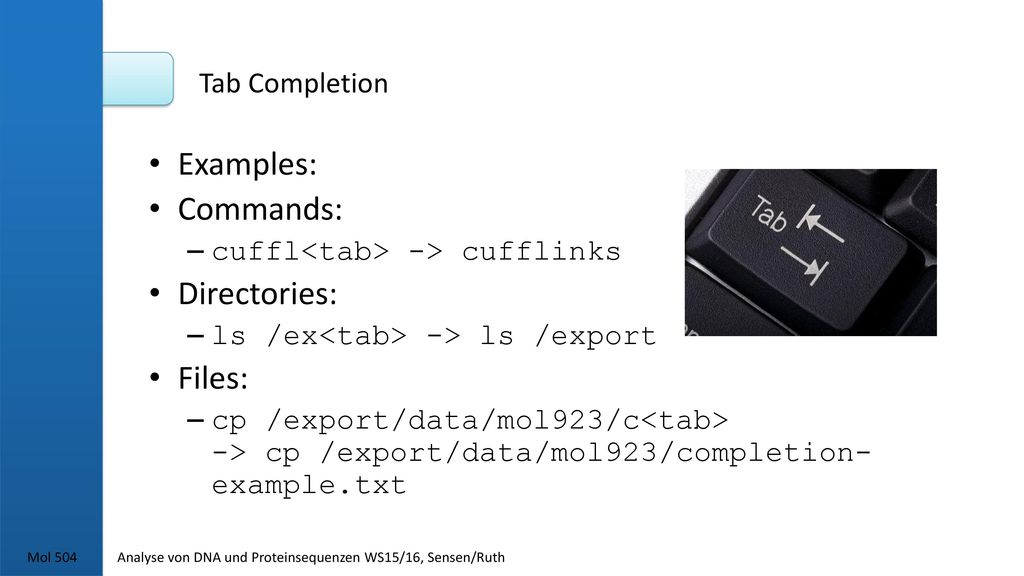 Examples: Commands: Directories: Files: Tab Completion