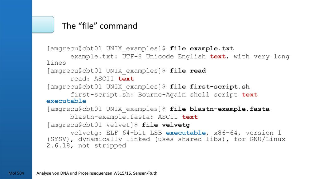 The file command