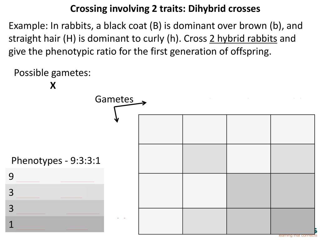 Module 7 Genetics Notes Ppt Download