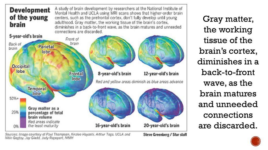 Article #2- Teenage Brain